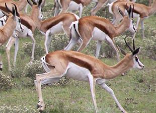 BOKAMOSO Safaris Botswana
